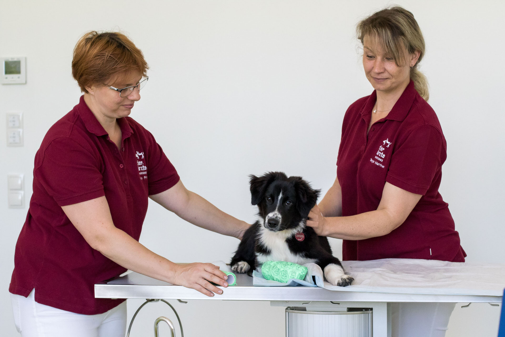 Tierarzt Bayreuth Behandlung