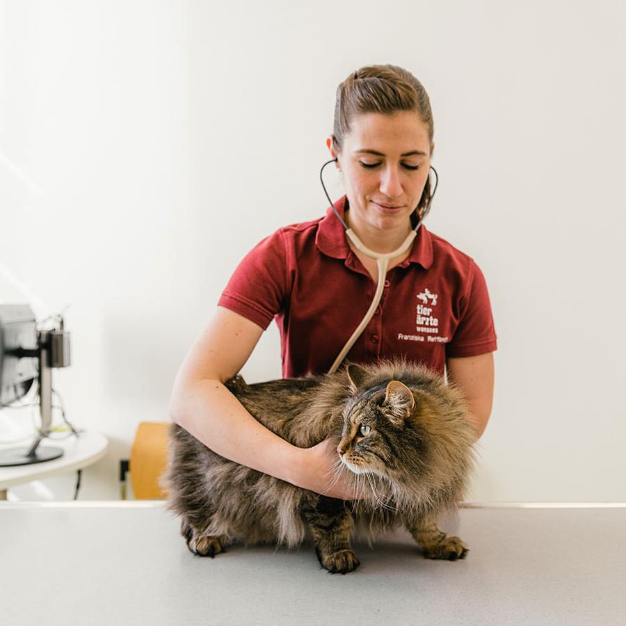Tierarzt bei Bayreuth